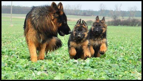 Minnesota K 9 Solutions Home Protectionyou Can Play Withminnesota